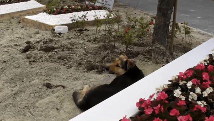 Ebru Şallı o köpeğin bakımını üstlendi - Sayfa:4