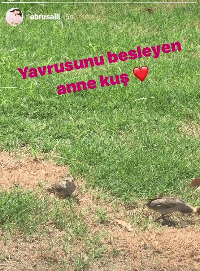 Ebru Şallı'dan 'anne kuş' paylaşımı - Sayfa:4