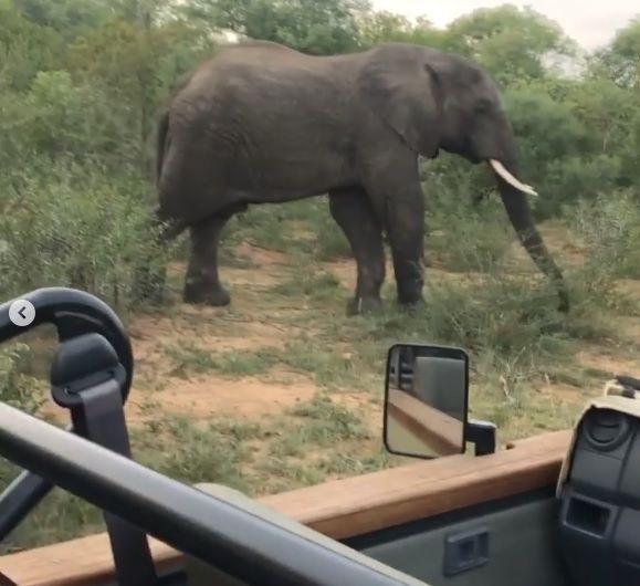 Ünlü çift Afrika'da safari yapıyor - Sayfa:4