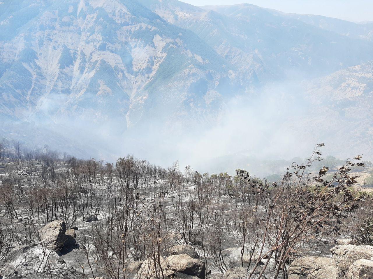 Selahattin Demirtaş'ın Tunceli'deki orman yangınlarıyla ilgili sözleri büyük tepki çekti. Nedim Şener tepki gösterdi - Sayfa:1